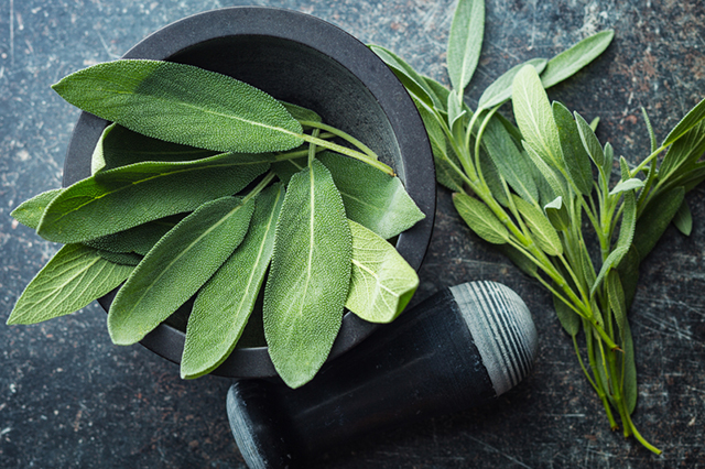Sage has the wonderful ability to support and heal both the body and mind.jpg