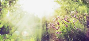 Naturally healing herbs you can grow at home