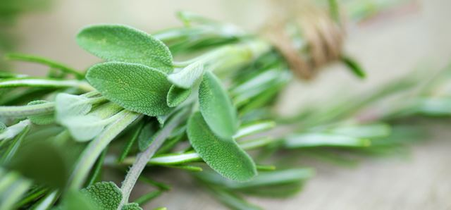 Sage – the plant of salvation